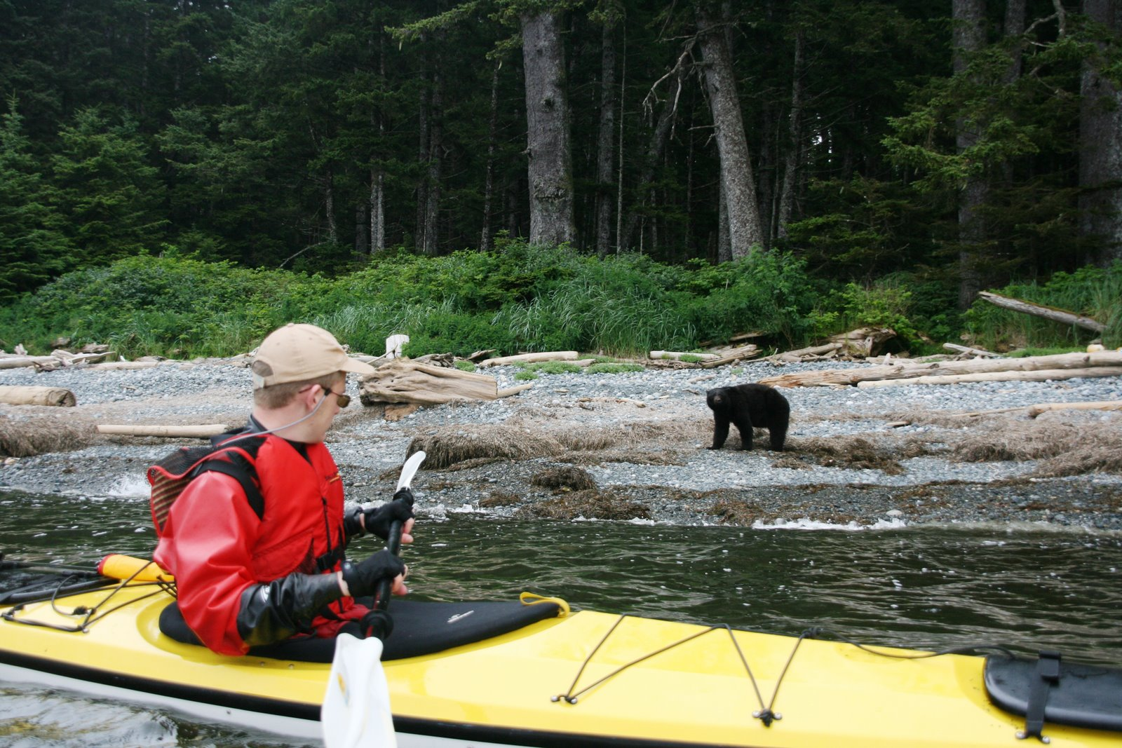Vancouver Island 2007 Youth Scholarship Expedition, Black bear from the kayak - kayaking around Cape Scott
